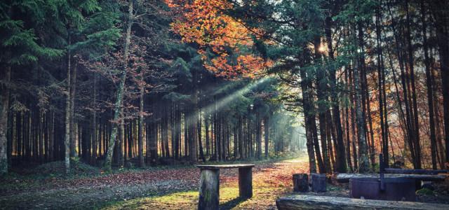 梦幻公园夕阳背景