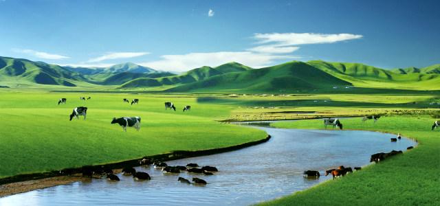 蓝天白云绿地奶牛牛奶广告