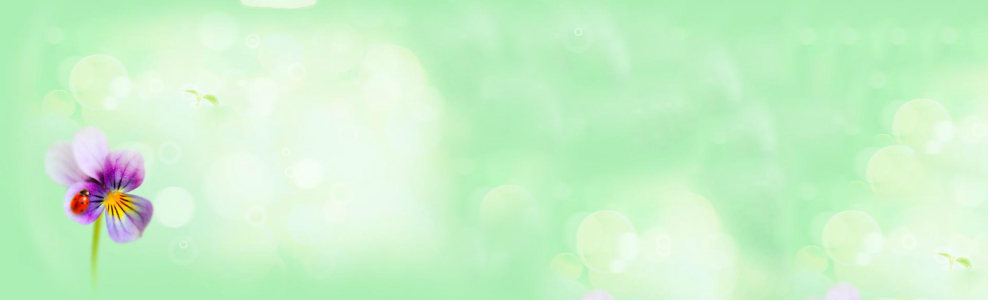 清新绿色光晕背景banner高清背景图片素材下载