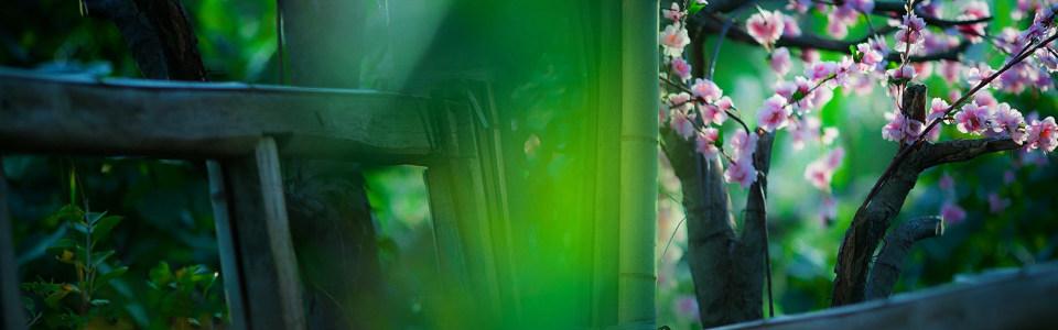 绿色清爽桃花盛开淘宝海报背景高清背景图片素材下载
