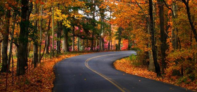 林间公路背景高清背景图片素材下载