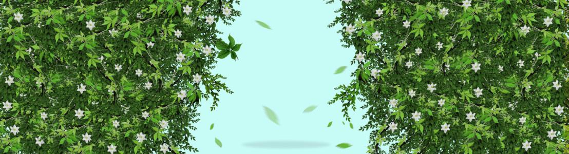 清新花草背景