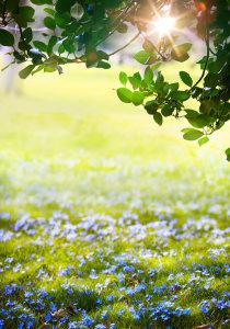 春天的花清新背景高清背景图片素材下载
