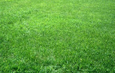 草地高清背景图片素材下载