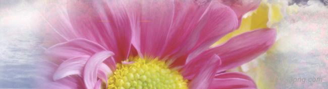 盛开花朵背景背景高清大图-盛开背景Banner海报