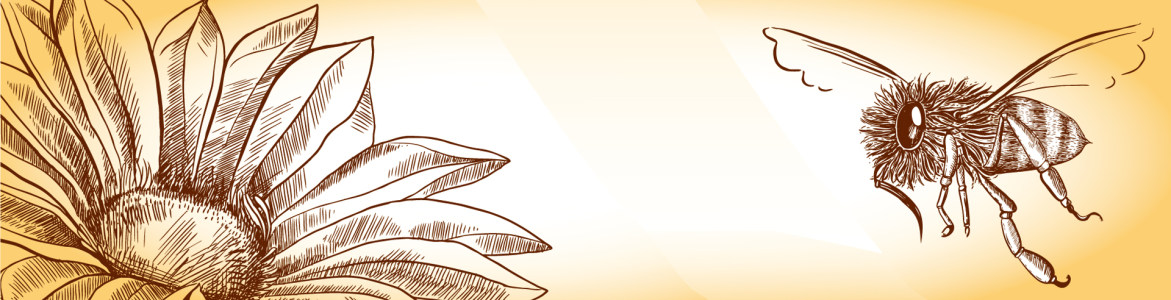 简笔画向日葵蜜蜂背景banner高清背景图片素材下载