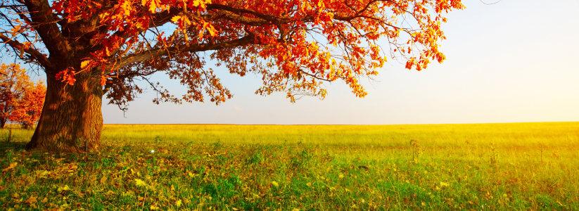 秋季唯美背景高清背景图片素材下载