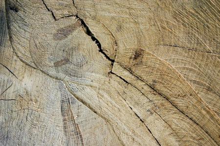 木材纹理切片纹理背景