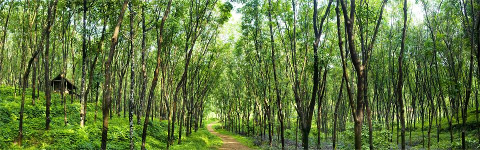 绿色森林风景背景