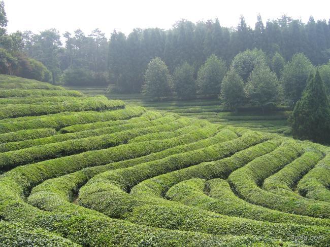 茶山背景高清大图-茶山背景其他图片