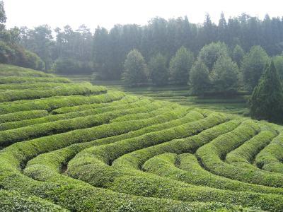 茶山高清背景图片素材下载