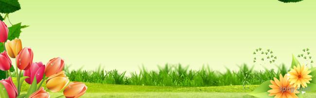 手绘清爽郁金香花朵海报背景背景高清大图-郁金香背景底纹/肌理