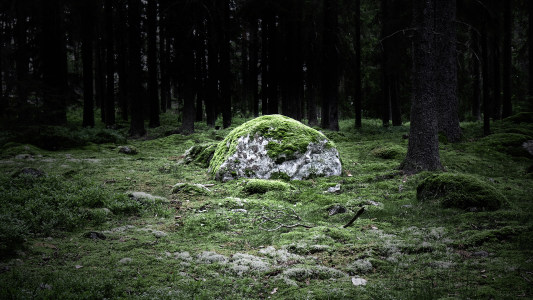 清新唯美树林背景