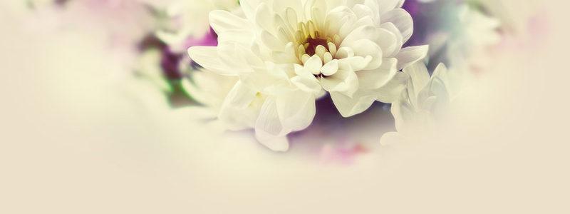 逼真花朵背景海报