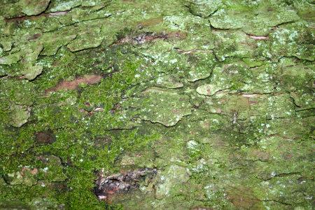 绿色的树皮纹理背景高清背景图片素材下载
