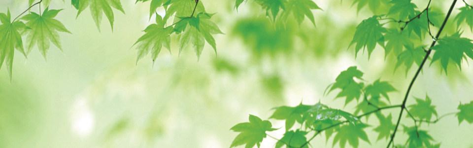 春季树叶唯美背景