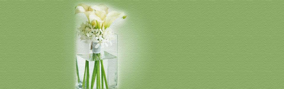 清新唯美白色花朵海报背景