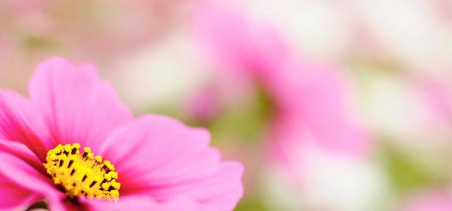 粉色鲜花背景